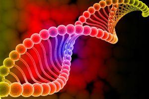 Твой генетический анализ